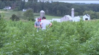 'Hemp Field Day' brings more than 300 people to Lancaster County farm - WPMT FOX 43