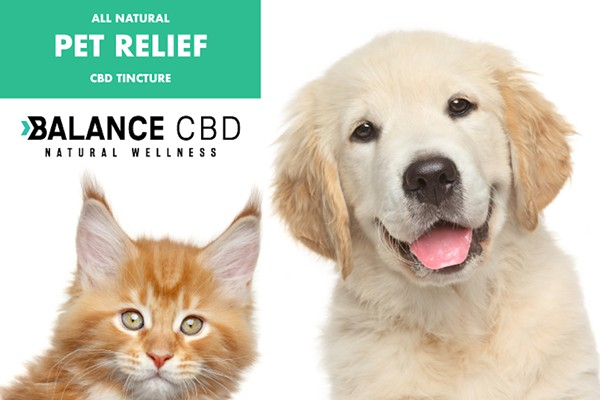 10 best CBD oils for dogs to treat your pet with - Orlando Weekly