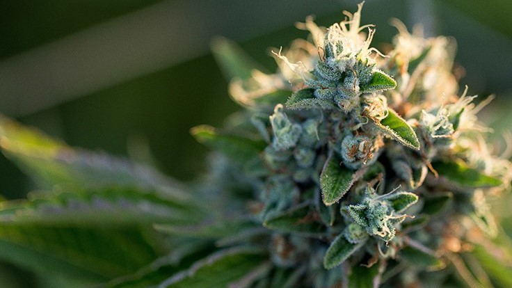 2019 State Cannabis Legislation: The Bills to Watch