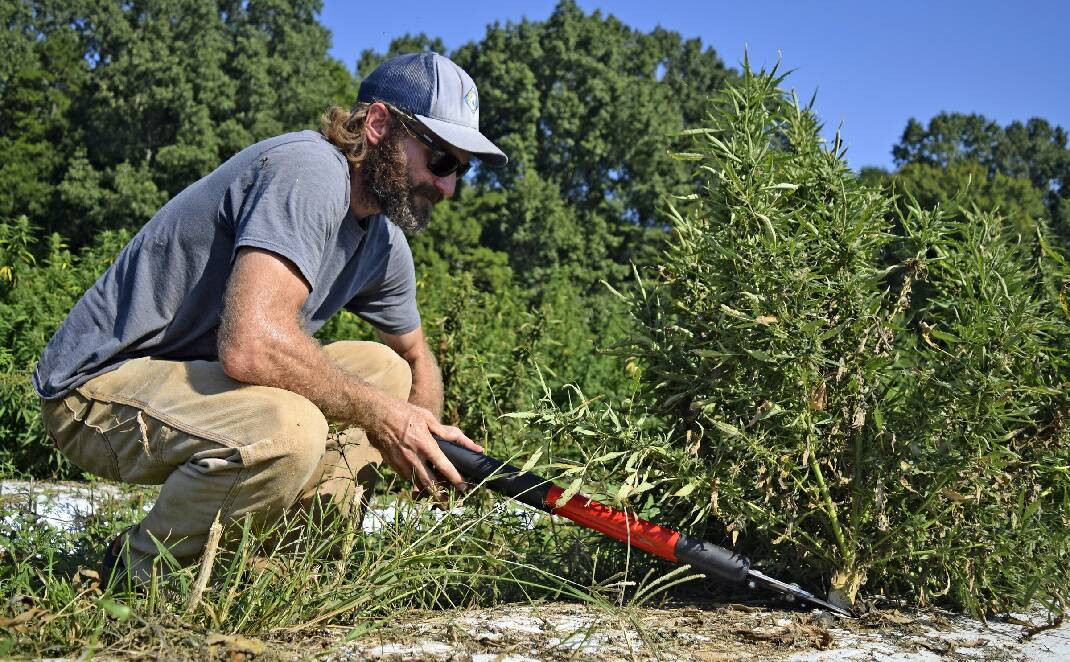 2020 Trend 2: Growing like a weed: The hemp trade is a complex, thriving industry that's rapidly gaining ground even as it generates confusion. - Chattanooga Times Free Press