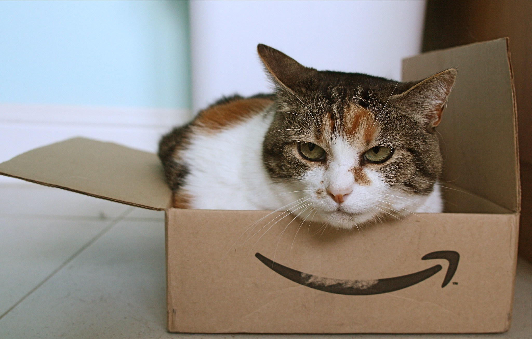 5 Best CBD Products for Cats Available on Amazon