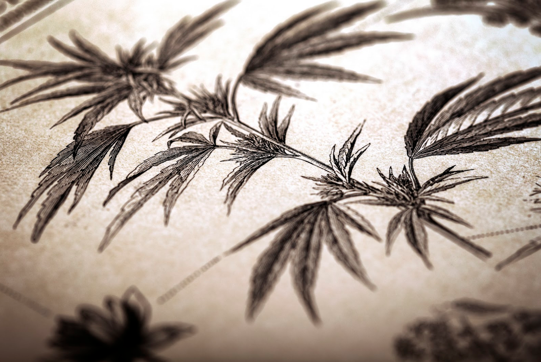 7 Pivotal Moments in Cannabis History