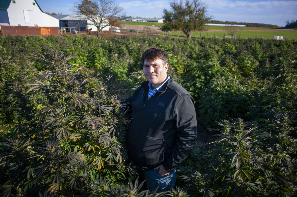 After seven decades of prohibition, the Wisconsin hemp industry is taking root — despite the risks and the wea - Chicago Tribune
