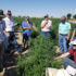 AgriLife Extension explores hemp issues, answers in Oklahoma, Colorado tour - AgriLife Today