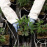 Are You Ready to Grow Your Own Cannabis? Take This Quiz to Find Out!