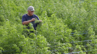 Arizona May Limit Hemp Farms' Proximity to Marijuana Farms - AZmarijuana.com