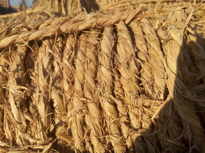 As China's Hemp Industry Suffers, US Hemp Growers Prepare to Pounce - China Law Blog