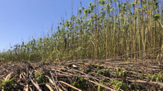 Baird, Braun Draft Letter Listing Concerns Of Federal Hemp Rules - Indiana Public Media
