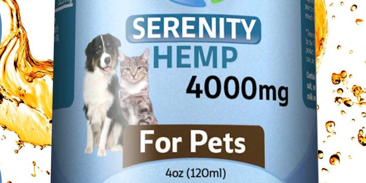 Best Hemp Oil for Dogs? Try These Brands - Inverse