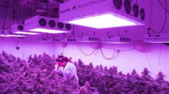 Black Dog Grow Technologies Approved To Run Indoor Hemp Research Facility In Colorado - Benzinga