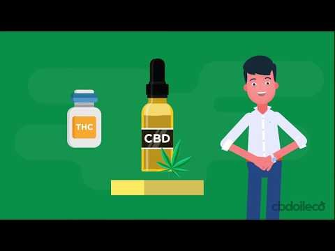 CBD - For Pain Relief, Anxiety And More