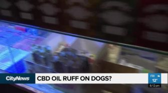 CBD Oil ruff on dogs?