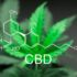 CBD is on fire, says Brightfield, but market remains dogged by regulatory confusion and 'unclear terminology surrounding hemp' - FoodNavigator-USA.com