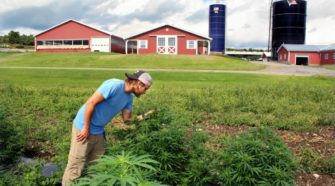 Canadian Corp. Growing Hemp Locally - AllOTSEGO