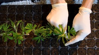 Cannabis stocks on track for sharp losses on the week after steep selloff