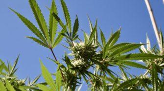 Congress Attaches Marijuana, Hemp And CBD Provisions To Federal Spending Bills - Marijuana Moment