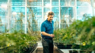 Cornell researchers: Genetics, not field conditions, makes hemp 'go hot' - Olean Times Herald