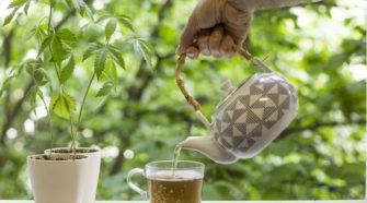 Creso to release immunity boosting CBD hemp teas in Q3 - Finfeed