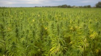 Editorial: GOP walkout could leave hemp bills hanging - Bend Bulletin