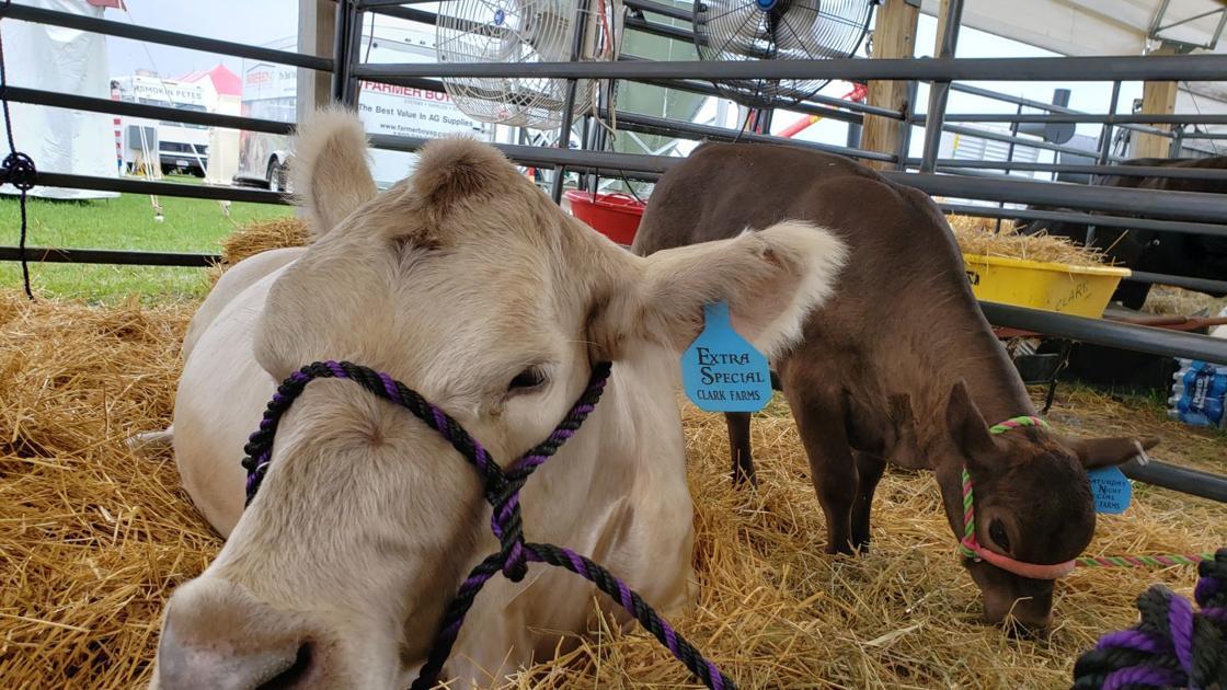 Empire Farm Days in Seneca Falls hosts new hemp center - Auburn Citizen