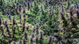 Expert Offers Predictions For The Hemp-Derived CBD Market in 2020 - Forbes