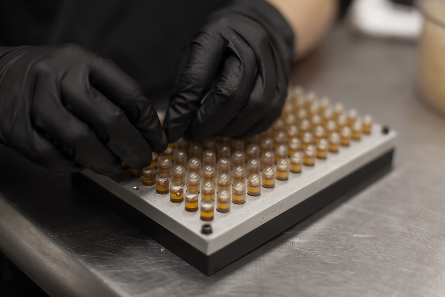 A lab tech closes CBD capsules after they are filled.