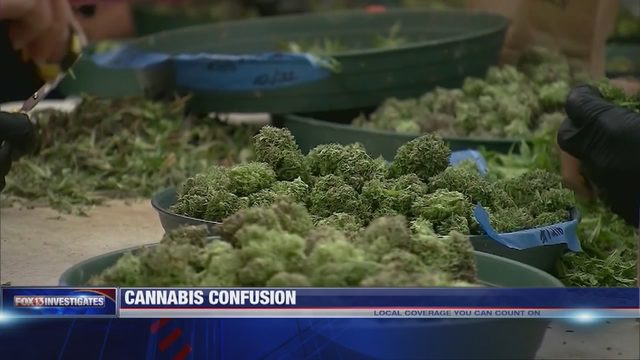 WATCH: FOX13 INVESTIGATES: Is legalized hemp causing problems for marijuana prosecutions?