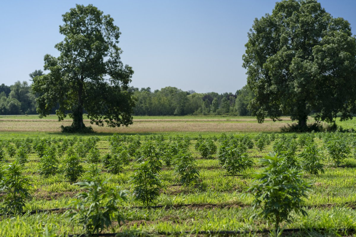 Farmers one step closer to hemp planting after rule approval - fox8.com