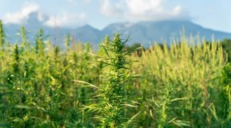 Feds Issue Hemp and CBD Banking Guidance - The National Law Review