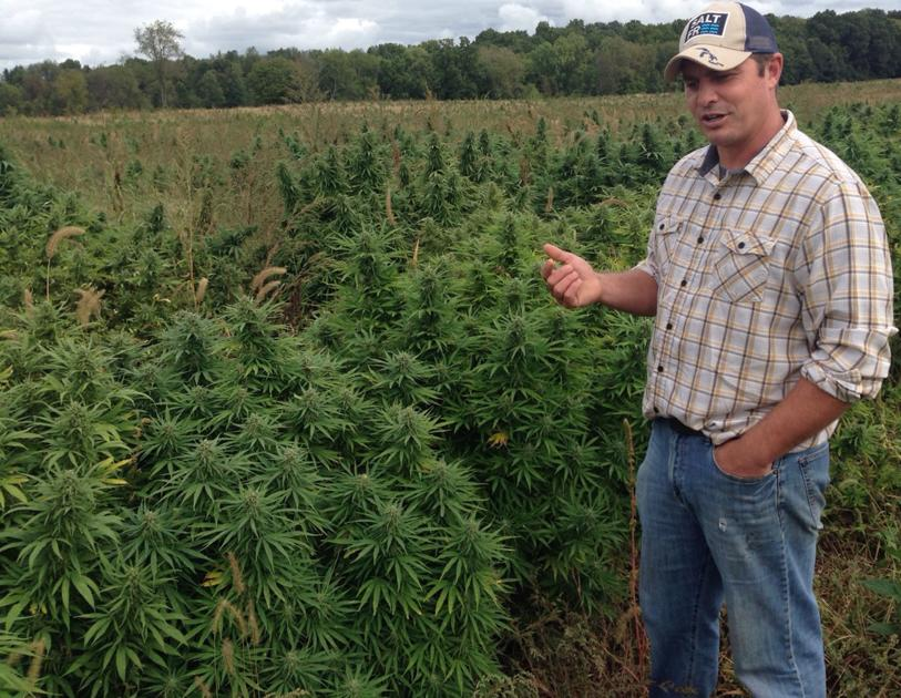 Fields Of Dreams: Industrial hemp added to the list of crops farmers are allowed to grow in Michigan - The Oakland Press