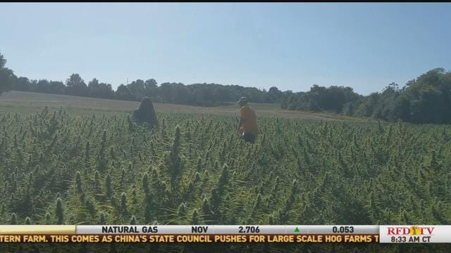 First Time Hemp Farmers Grow As Crop Demand Increases - RFD-TV