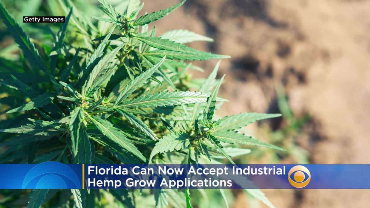 Florida Can Now Accept Applications To Grow Industrial Hemp - Yahoo News
