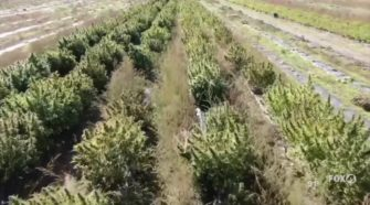 Florida farmers hope hemp can help to rebound from the COVID-19 pandemic - Yahoo News