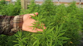 For Many Hemp Farmers, The First Year Was As 'Bad As It Can Get' - WVIK