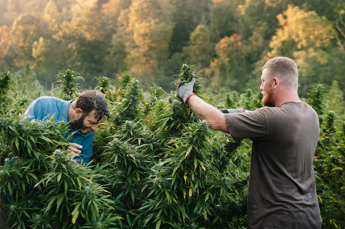 For Young Farmers, Hemp Is a 'Gateway Crop' - Civil Eats