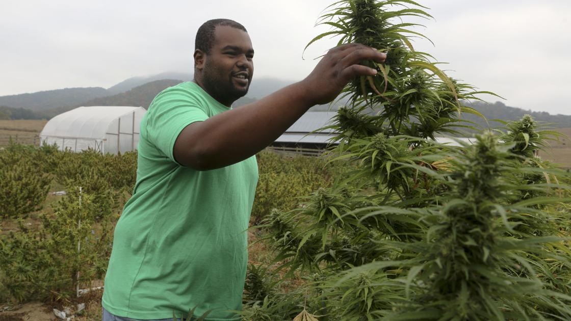 From Hokie football to hemp - Roanoke Times