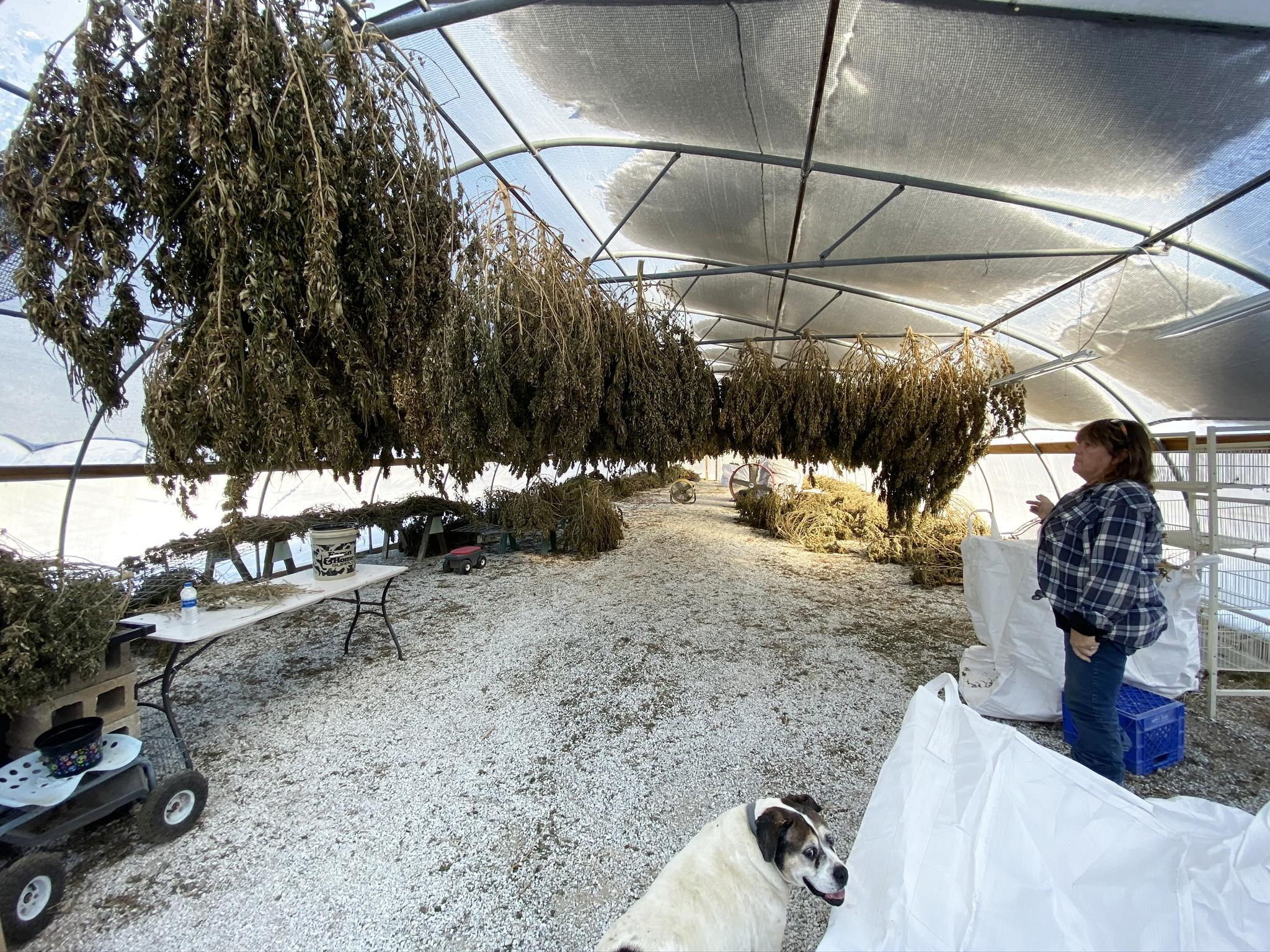 Fulton County farm expands to hemp - Galesburg Register-Mail
