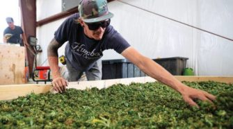 Goodbye alfalfa, hello hemp - Las Vegas Sun