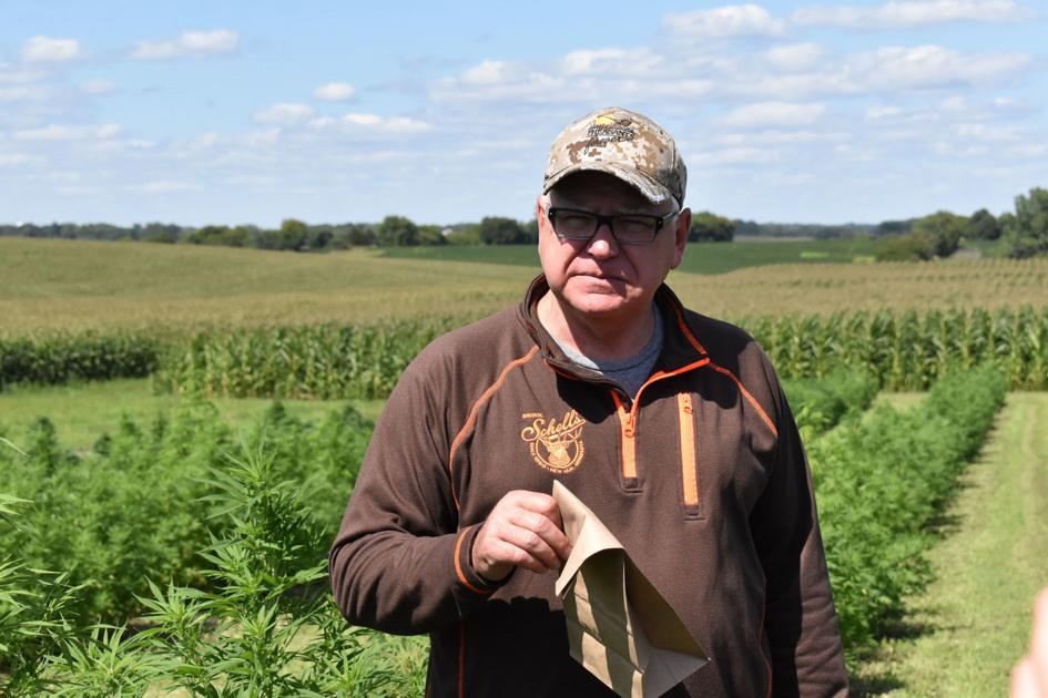 Gov. Walz dons 'chief hemp inspector' title, boosts budding industry - Farm Forum
