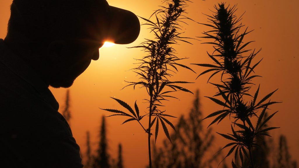 Government Assistance Options for U.S. Hemp Farmers Affected By COVID-19 - CBD Testers