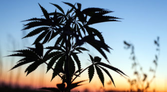 Growing concerns prompt senators to urge USDA to adopt new hemp rules - NutraIngredients-usa.com