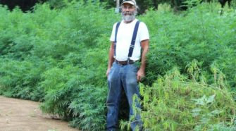 Growing hemp amidst new laws - The Daily Progress