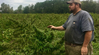 Growing hemp can reap vast rewards - but laws on farming it are muddy - SFGate