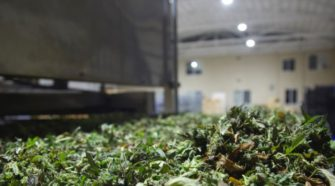 HEMP8 deploys novel drying technology to transform hemp-derived CBD industry - FoodNavigator-USA.com