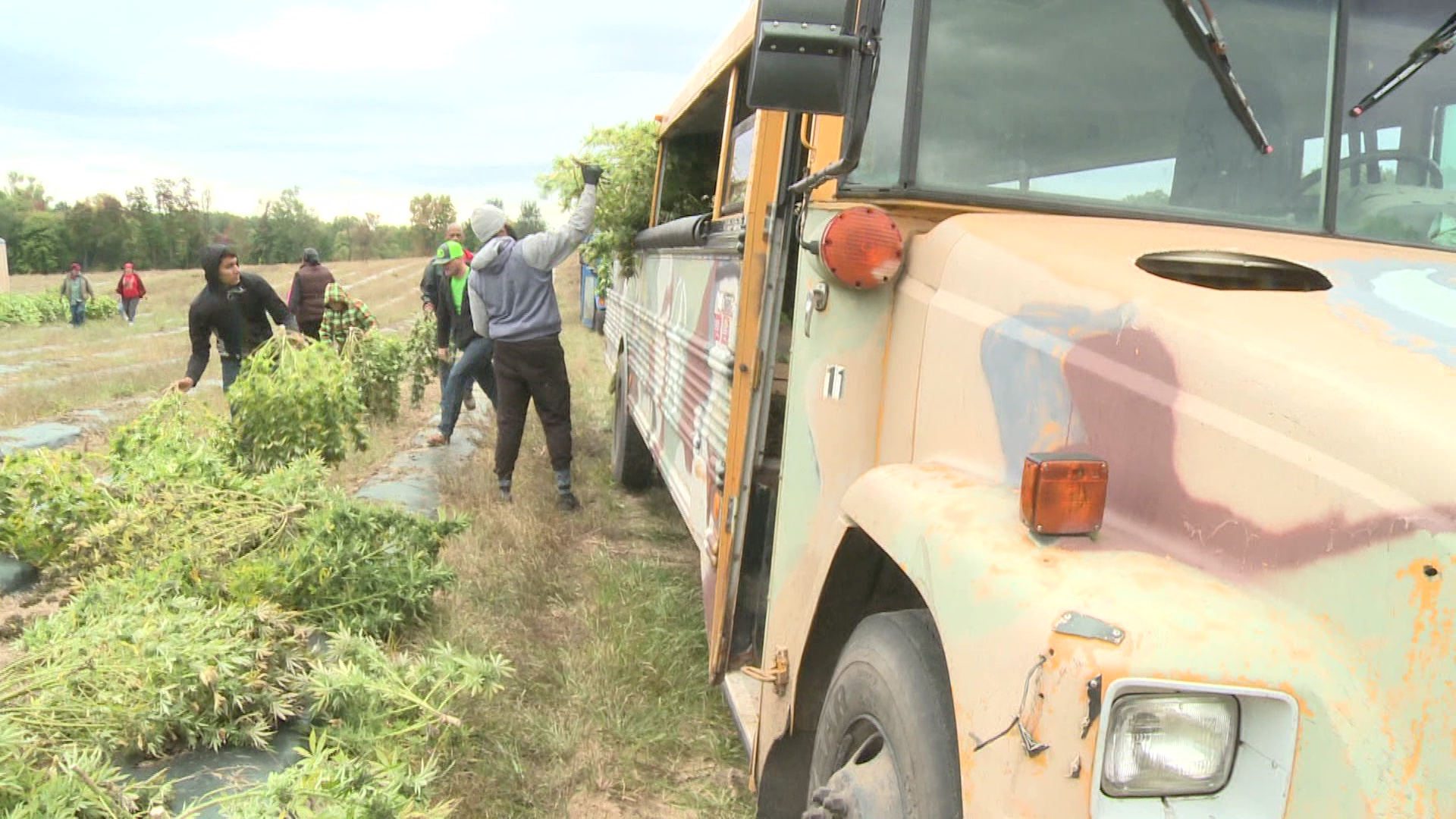 Harvest and Hemp Festival planned for Saturday - WNDU-TV