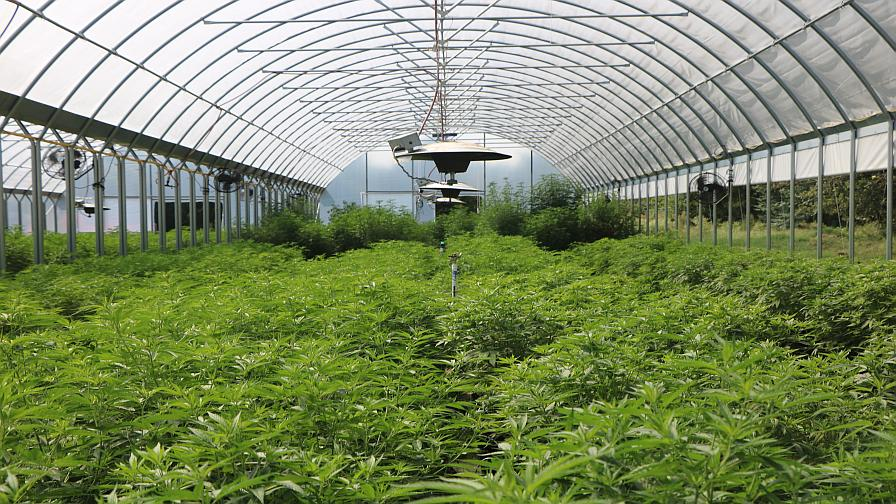Hemp Agronomist, IPM Expert Talk Farmer Tips During Virtual Event - Greenhouse Grower