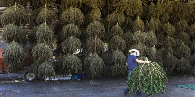 "Hemp Facility Will Be ""Single Largest Investment Ever"" for Arizona Town - AZmarijuana.com"