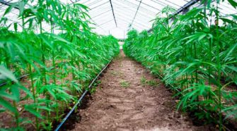 Hemp Pesticide Safety Education Workshop offered statewide March 12 - Nevada Today