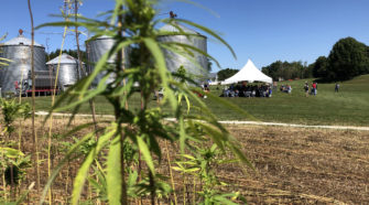 Hemp Regulation Becomes Clearer Thanks To Federal Memo, But Clock Ticking On Final Rules - Indiana Public Media