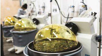 Hemp: The Green Rush - Beaverton Valley Times News